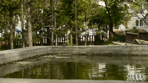 sparrow in the edge of a pool,swing tree in courtyard Stock Video Footage