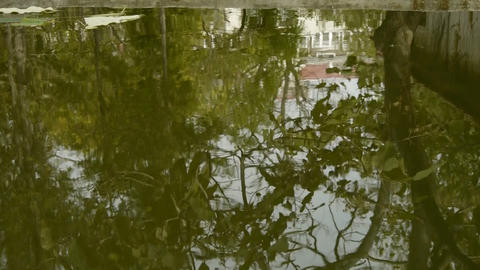 Trees and house reflected in pool,rippled,like a mirror Footage