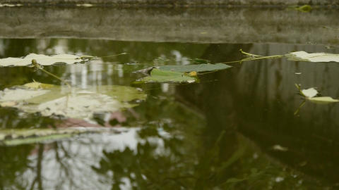 Leaves floating on the water,Trees reflected in... Stock Video Footage