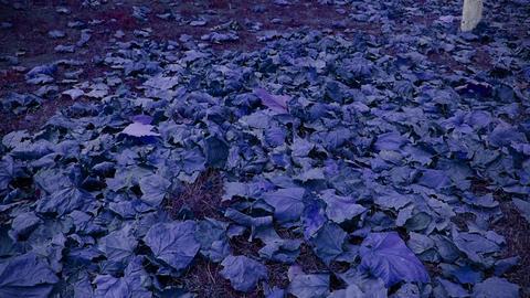 falling purple leaves full on ground Stock Video Footage
