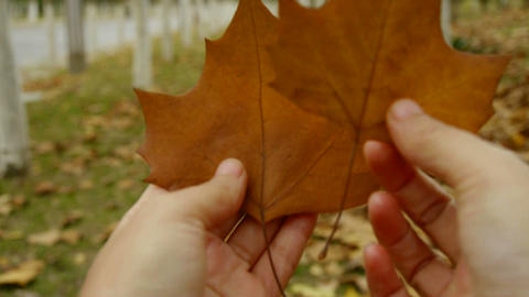 two leafs in hand,shaking in the wind,Forest as background Footage