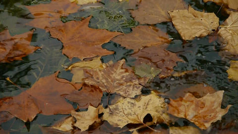 leaves on the lake,slightly shaking Stock Video Footage