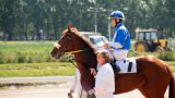 Horse Riding On The Racetrack stock footage
