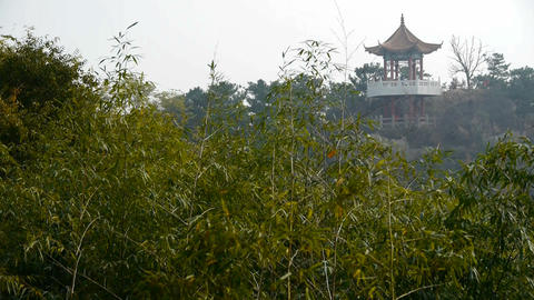 wind shaking bamboo,Pavilion on hill in distance Footage