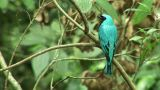 Brazil: Amazon river region birds 1 Footage