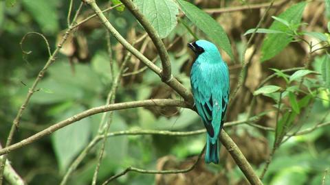 Brazil: Amazon river region birds 1 Stock Video Footage