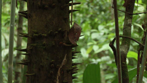 Brazil: Amazon flora 1 Stock Video Footage