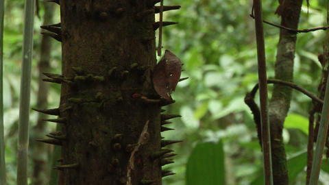 Brazil: Amazon flora 1 Stock Video Footage
