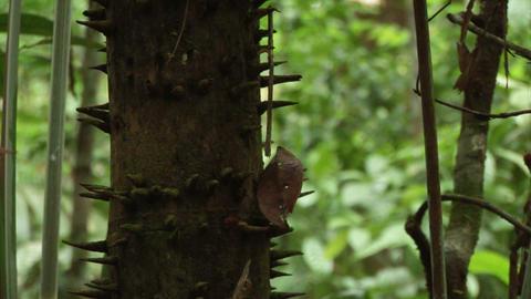 Brazil: Amazon flora 1 Live Action