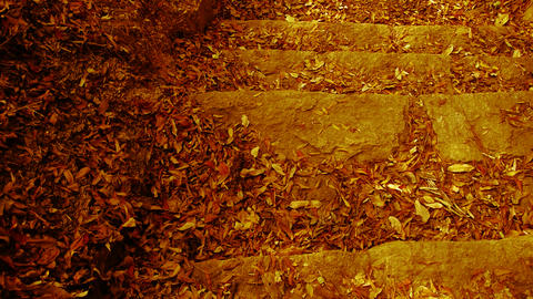 many yellow leaf on trails,quiet and desolate Stock Video Footage