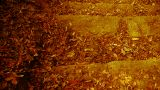 many yellow leaf on trails,quiet and desolate Footage