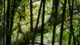 wind shaking bamboo,Trunk,branches,quiet atmosphere in sunshine Footage