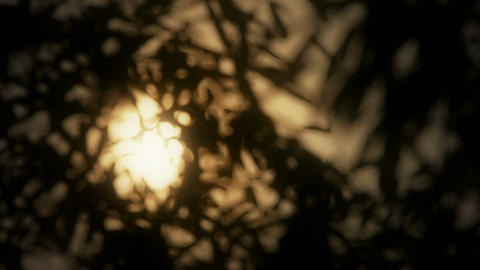 wind shaking bamboo silhouette,sunrise,sunset,sunshine,Hazy style Live Action