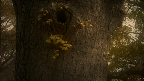 Thick trunk,lush ginkgo tree in breeze,Trunk,forest,woods Stock Video Footage