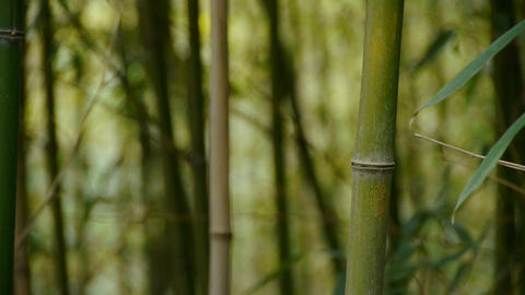 wind shaking bamboo,quiet atmosphere Stock Video Footage