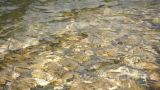 Water Stream Close Up 02 stock footage
