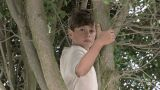 Two boys in a tree Footage