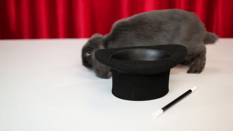Rabbit hopping past top hat and magic wand Stock Video Footage