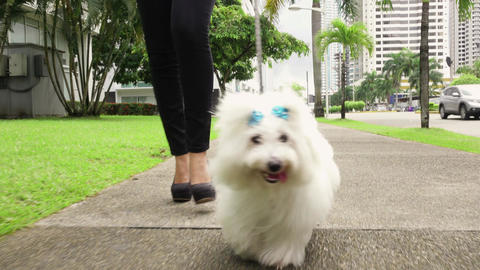 2 Businesswoman Commuting To Office With Her Dog Footage