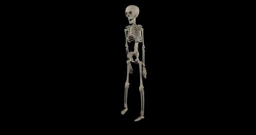 skeleton dance alpha 02 Footage