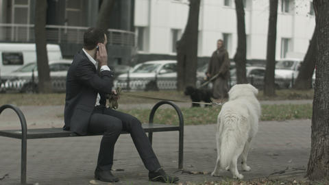 Business man with his white dog talking by phone another black dog at background Footage