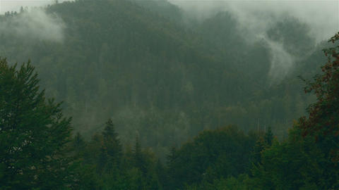 Timelapse Of A Pine Tree Forest With Mist And Fog In Transylvania, Romania stock footage