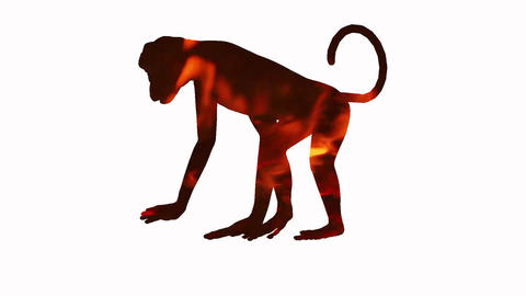 fire monkey animation 2016 calendar Animation