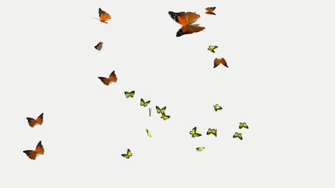 beautiful butterfly Swarm on a transparent background Animation