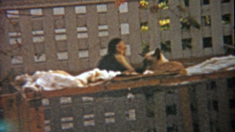 1959: Monkey and cat play together as animal companion buddy friends Footage