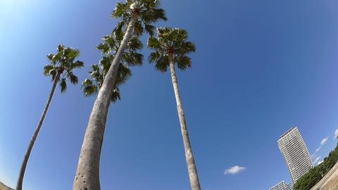 Palm Trees On A White Sandy Beach stock footage