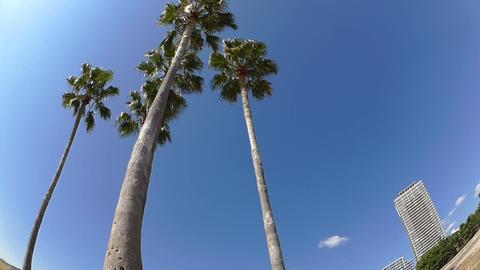 Palm Trees on a White Sandy Beach Footage