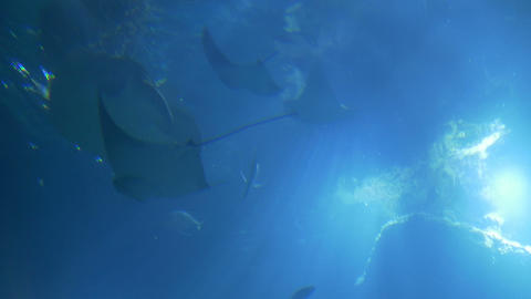 Ocean Life View From Bottom stock footage