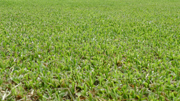Artificial Turf Grass stock footage