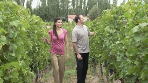 Couple walking through vineyard Stock Video Footage