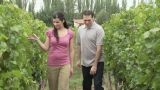 Couple walking through vineyard Footage