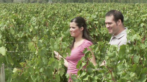 Couple in a vineyard looking at plants Stock Video Footage
