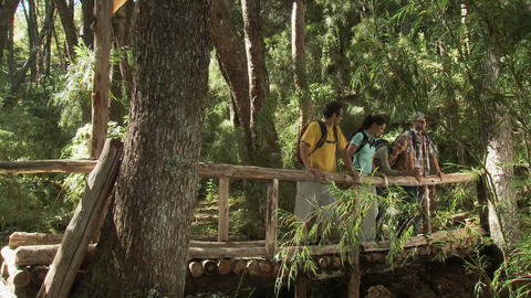 Hikers in forest walking across bridge and looking at view Stock Video Footage