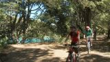 People cycling in forest Footage