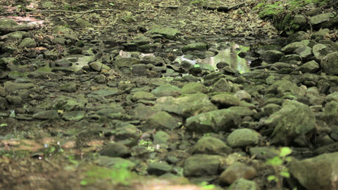 Male cyclist riding through forest Stock Video Footage