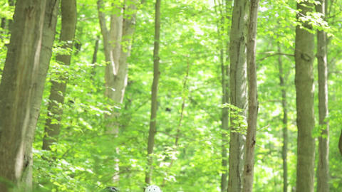 Four cyclists in forest Stock Video Footage