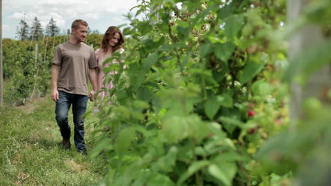 Two couples walking amongst fruit buses on farm Stock Video Footage