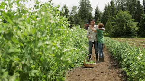 Couple hugging in field on farm and looking at plants Stock Video Footage