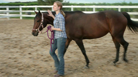 Woman leading horse through paddock Stock Video Footage