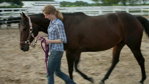 Woman leading horse through paddock Live Action