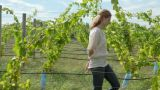 Woman walking through vineyard Footage