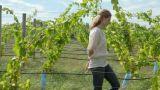 Woman walking through vineyard Footage