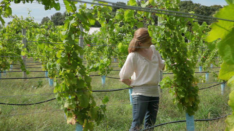 Woman walking through vineyard Stock Video Footage