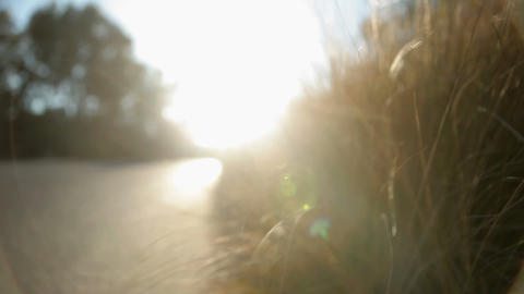 Grass blowing in the wind, close up Stock Video Footage