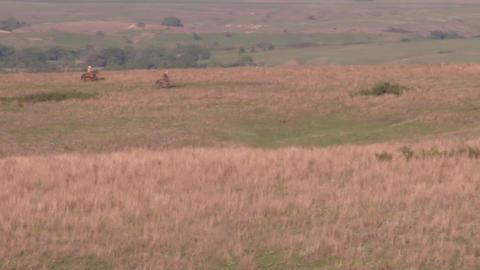Herding Cattle Footage