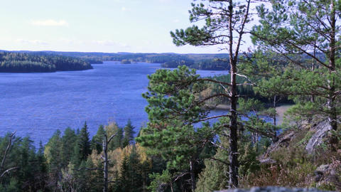 Lake landscape with pine trees in Finland Footage
